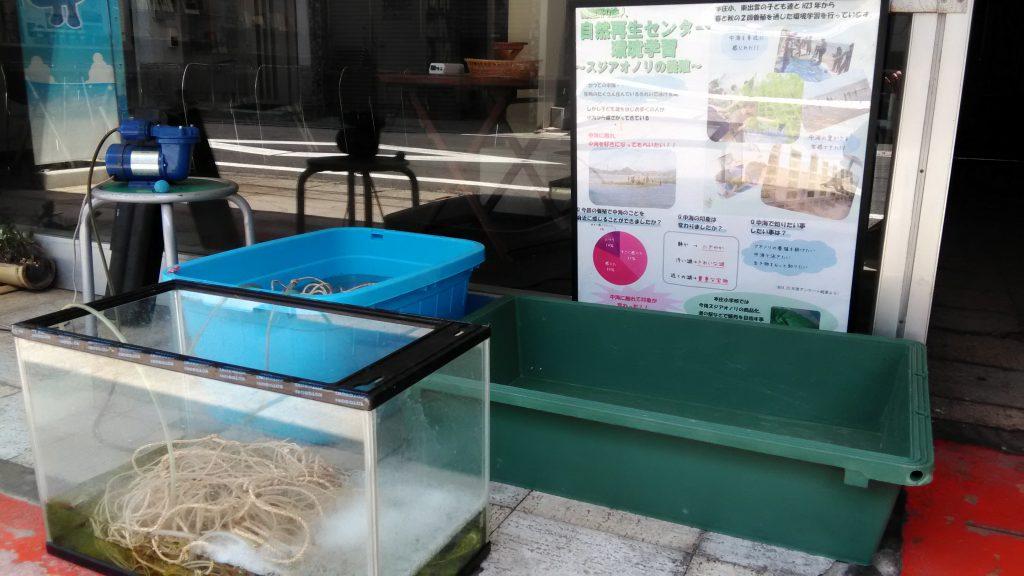画像:環境学習 スジアオノリの養殖