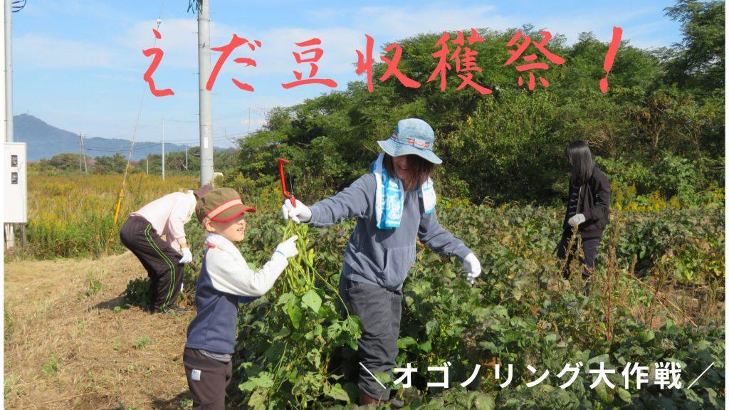 画像:【締め切りました】オゴノリング大作戦 枝豆収穫祭!